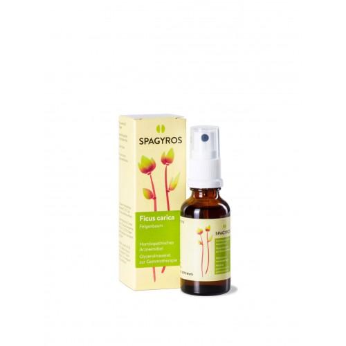 SPAGYROS GEMMO Ficus carica Glyc Maz D 1 30 ml